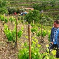Виноградникi Прiорату